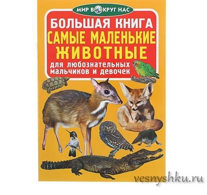 большая книга самые маленькие животные главная